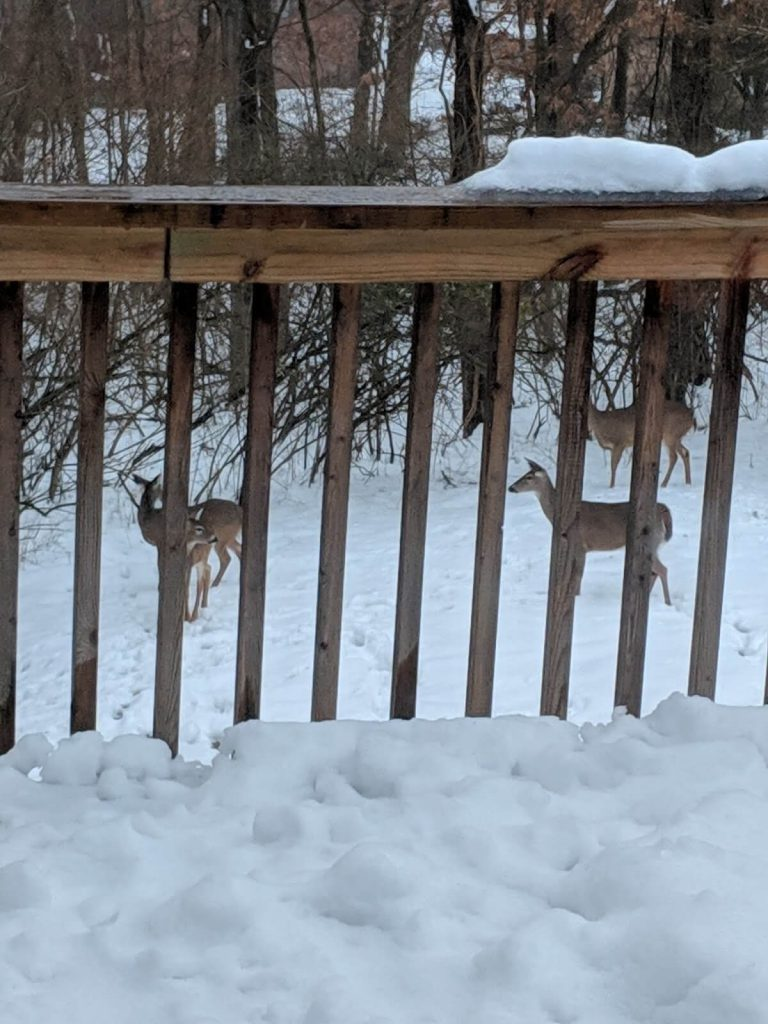 שלג בחצר שלנו