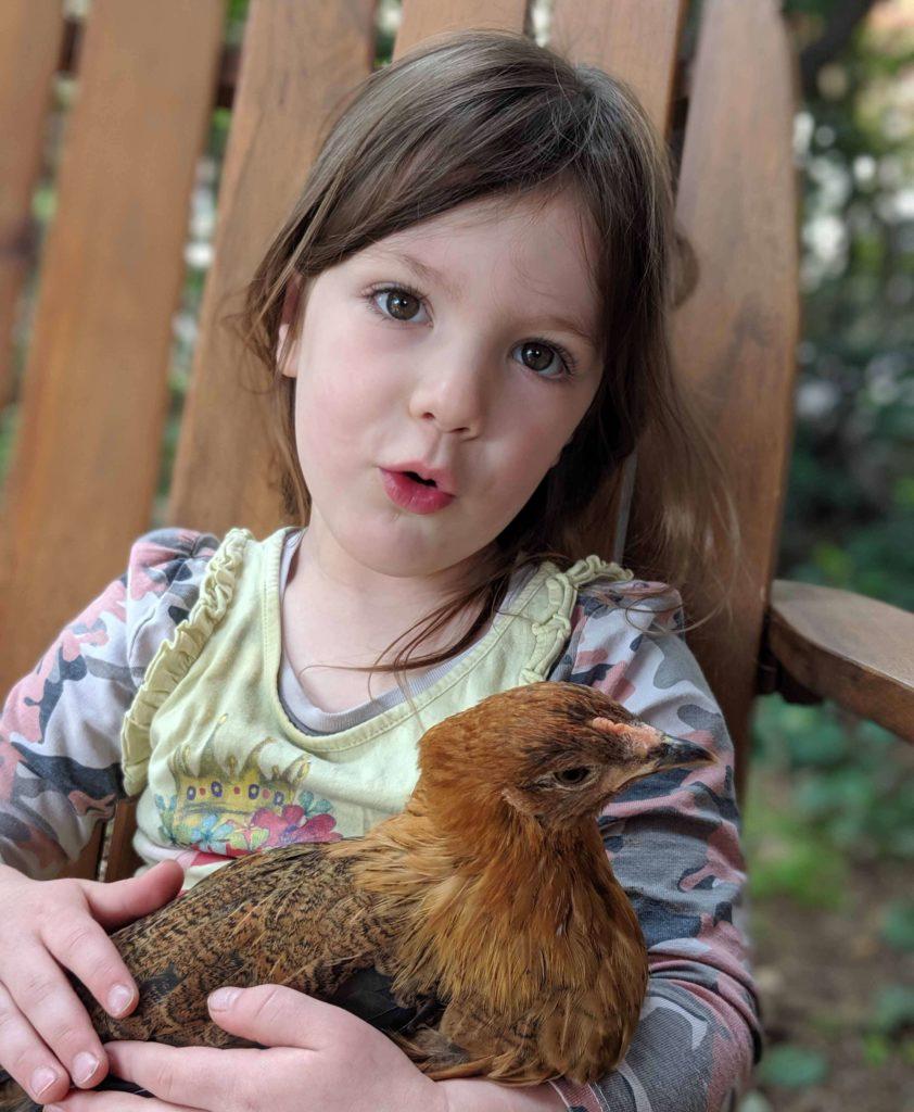 ילדה מחזיקה תרנגולת