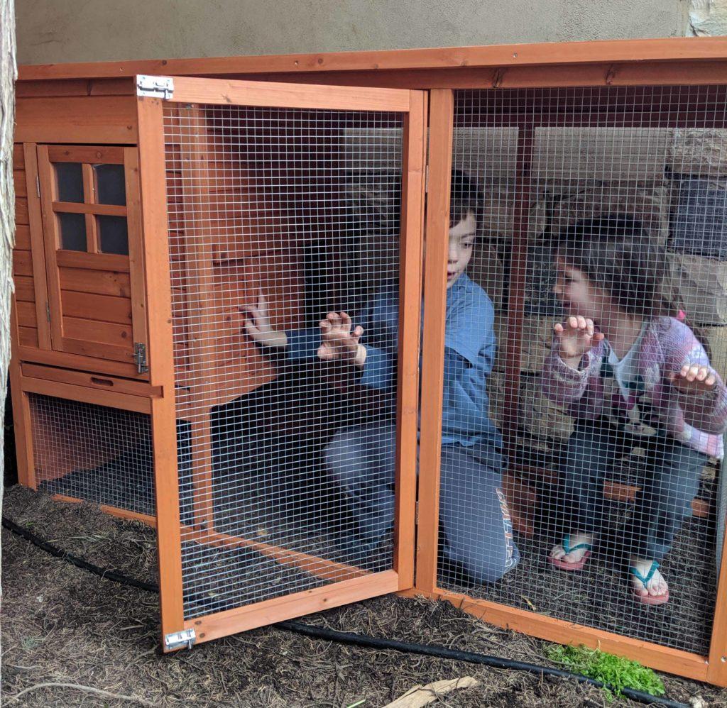 ילדים בתוך לול תרנגולות